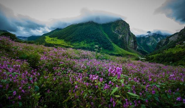 Dolina-cvijeca-9