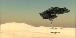 Drvo-Tenere