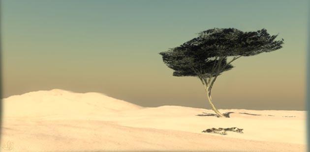 Čudno i usamljeno drveće - Page 11 Drvo-Tenere