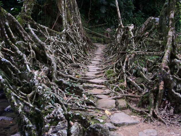 mostovi-od-korijenja-0a