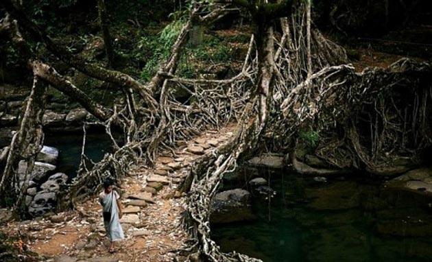 mostovi-od-korijenja-2