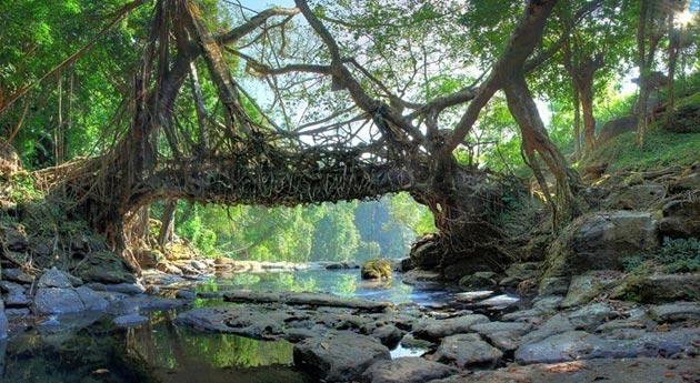 mostovi-od-korijenja-3