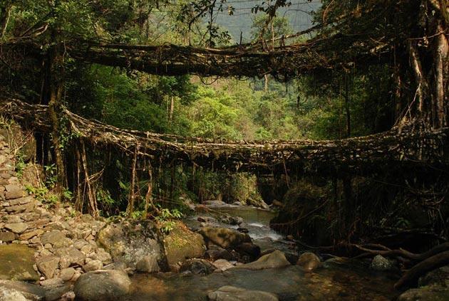 mostovi-od-korijenja-4
