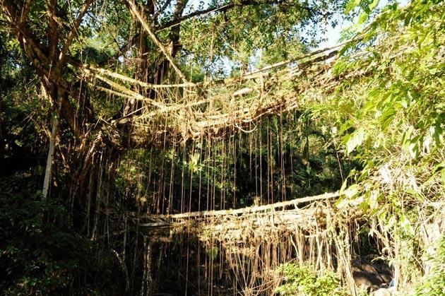 mostovi-od-korijenja-5