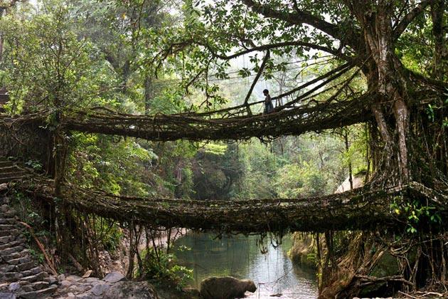 mostovi-od-korijenja-6