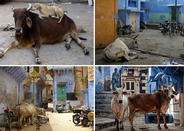 Džodpur: Plavi grad u Indiji Plavi-grad-7