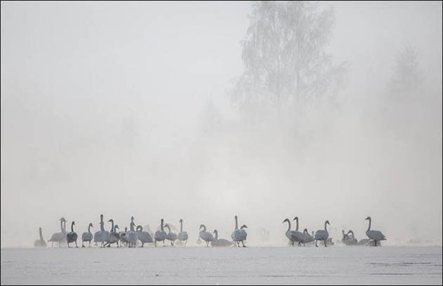 Labudje-jezero-1