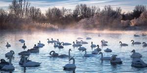 Labudje-jezero