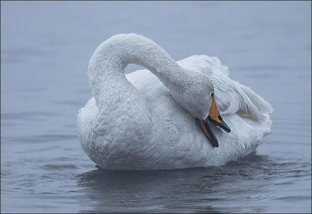 Labudje-jezero-6