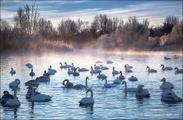 Labudje-jezero-8
