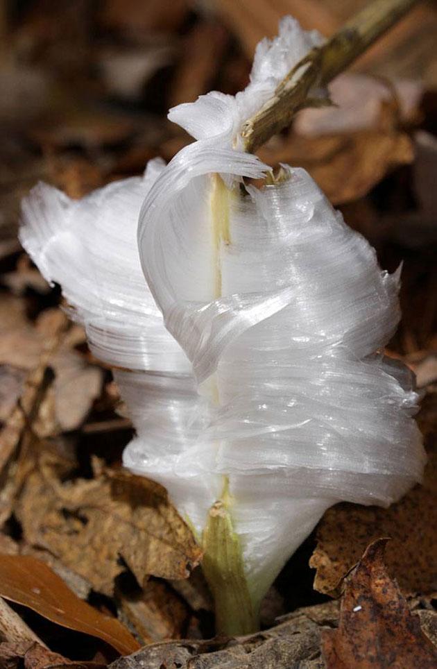 Zamrznuto-cvijece-11
