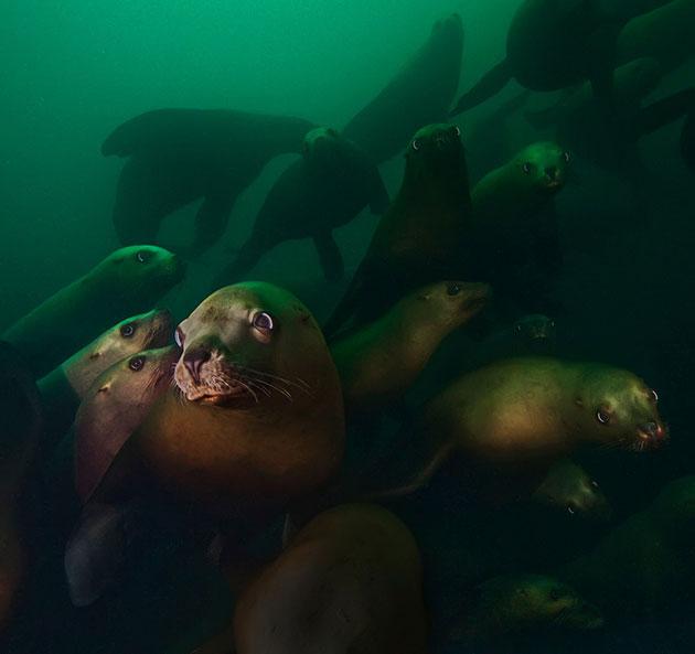 podvodne-fotografije-1