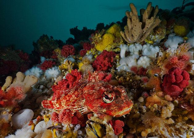 podvodne-fotografije-14
