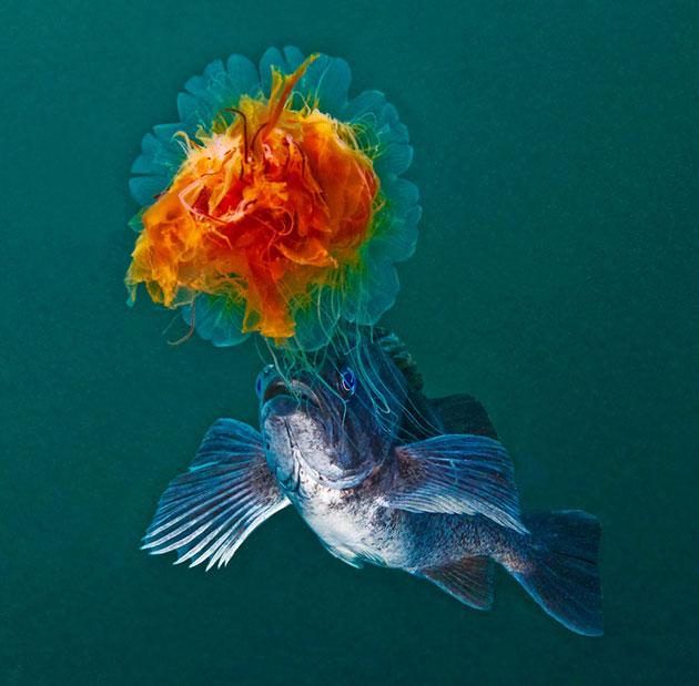podvodne-fotografije-15
