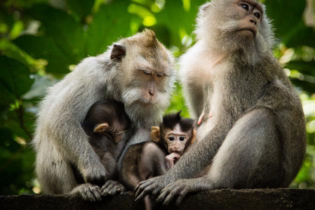suma-majmuna-1