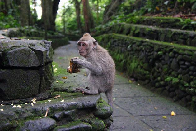 suma-majmuna-10