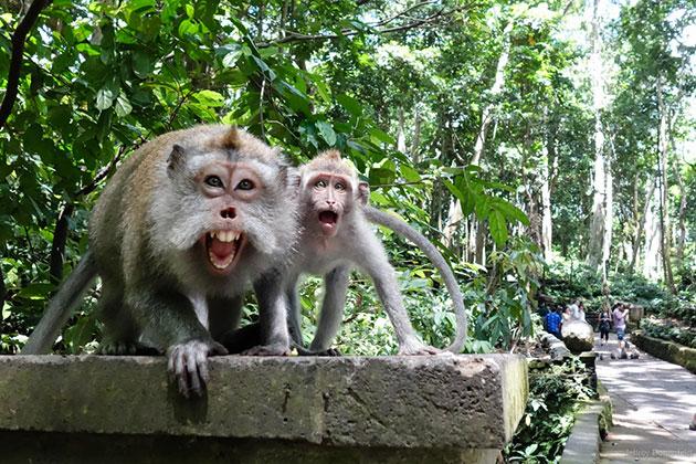 suma-majmuna-3
