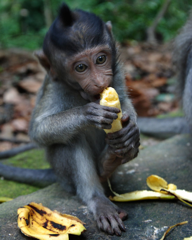 suma-majmuna-9