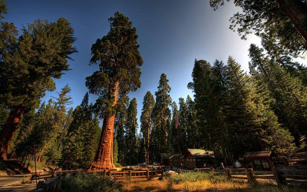 Sequoia-0