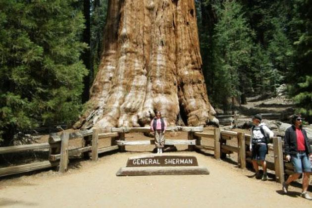 Sequoia-1