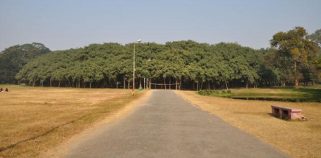 NAJŠIRE DRVO NA SVIJETU! Veliki Banjan: Drvo koje izgleda kao cijela šuma