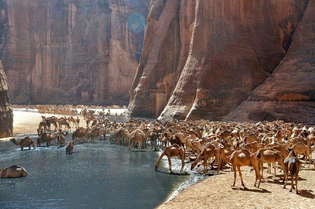 Guelta-d'Archei-1