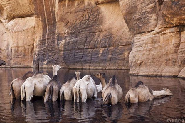 Guelta-d'Archei-4