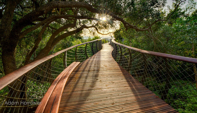 Kirstenbosch-0