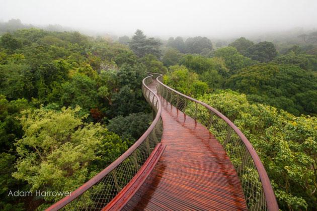 Kirstenbosch-10
