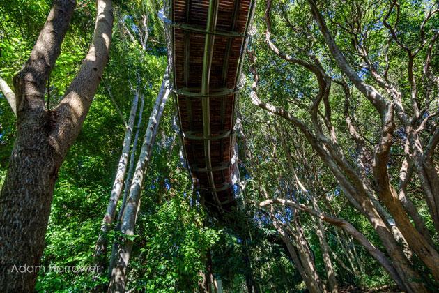 Kirstenbosch-2a