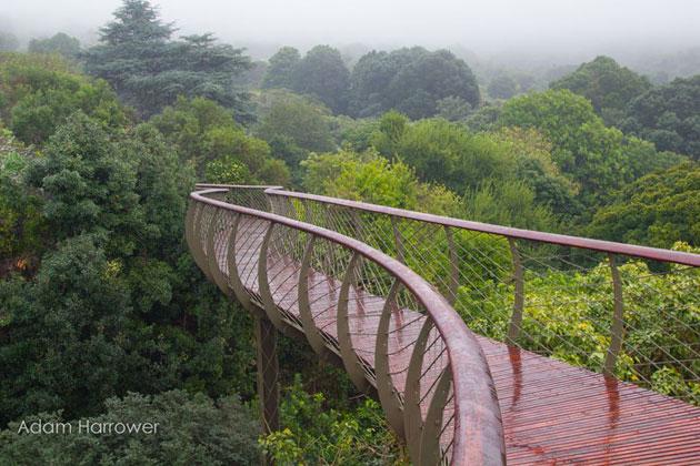 Kirstenbosch-7