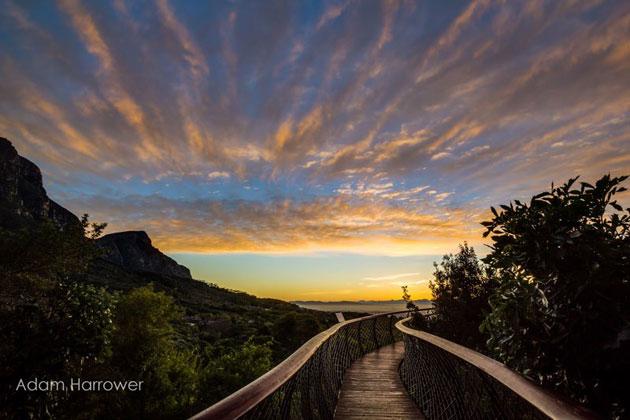 Kirstenbosch-8