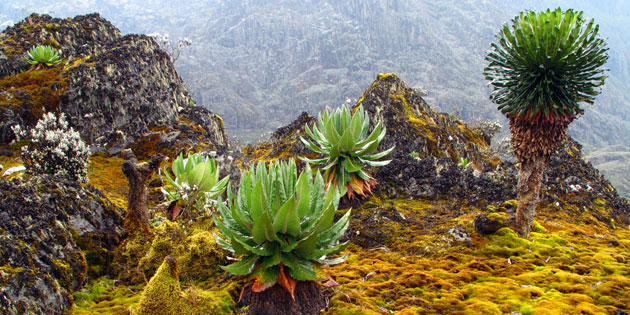 Rwenzori-Mountains-2