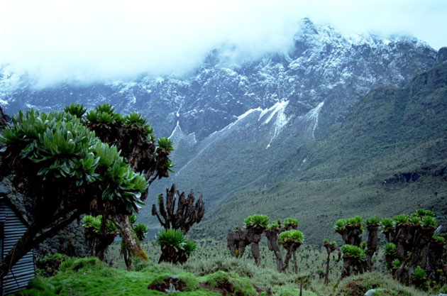 Rwenzori-Mountains-5