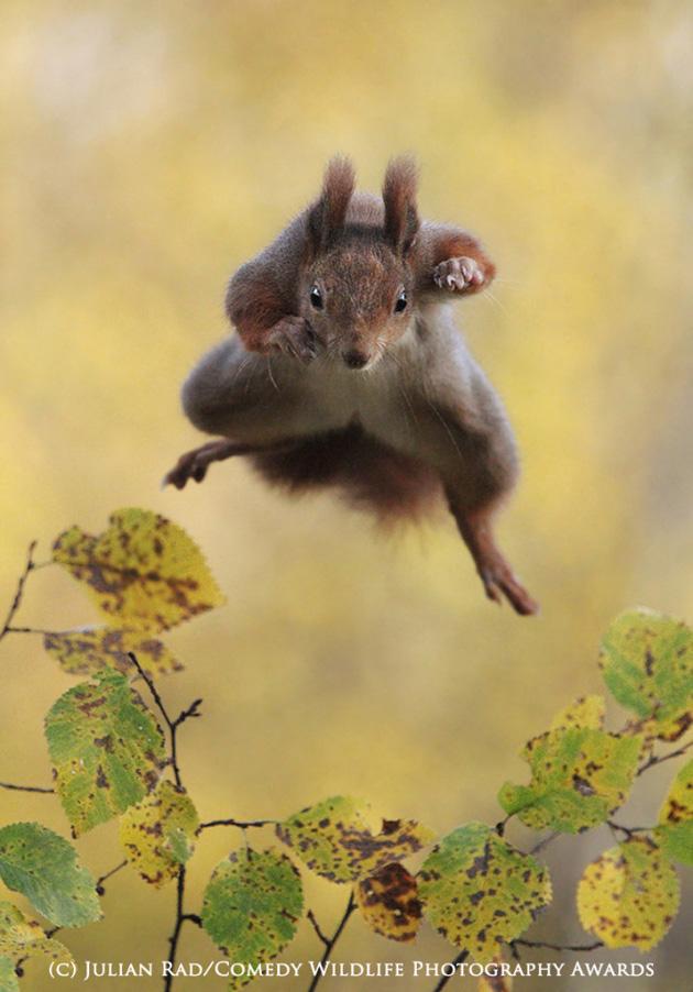 Comedy-Wildlife-Photography-10