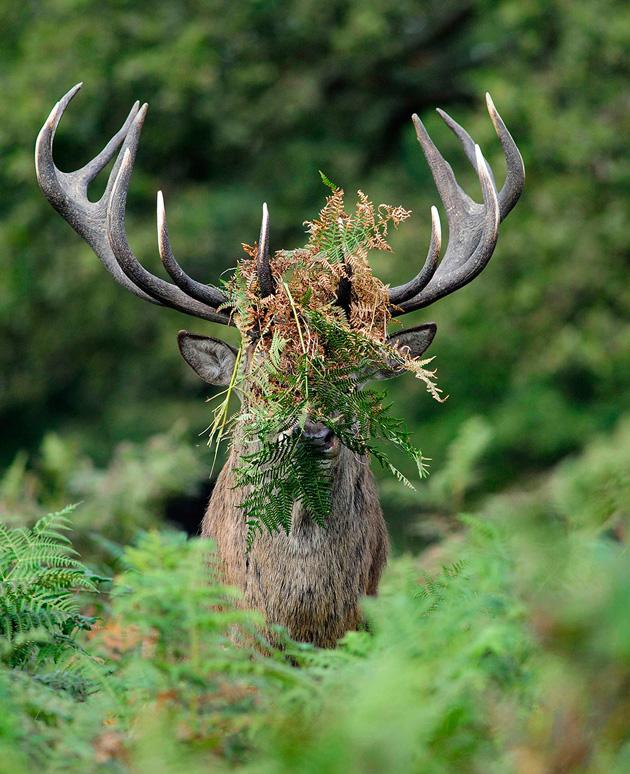 Comedy-Wildlife-Photography-2