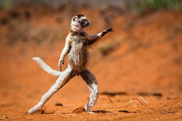 Comedy-Wildlife-Photography-3