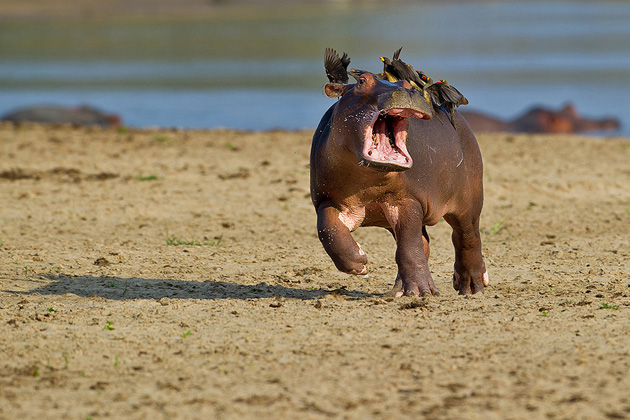 Comedy-Wildlife-Photography-7