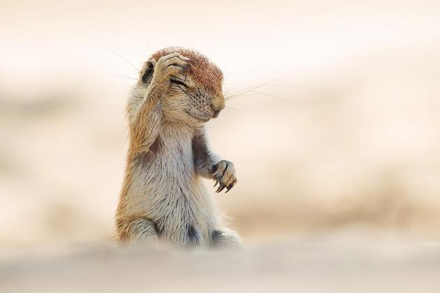 Comedy-Wildlife-Photography-9