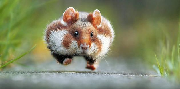Comedy-Wildlife-Photography