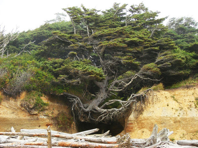 Drvo-zivota-2