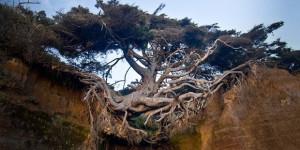 Drvo-zivota