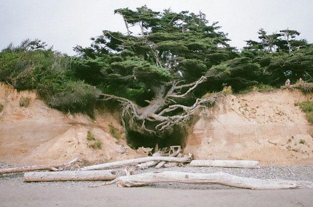 Drvo-zivota-5