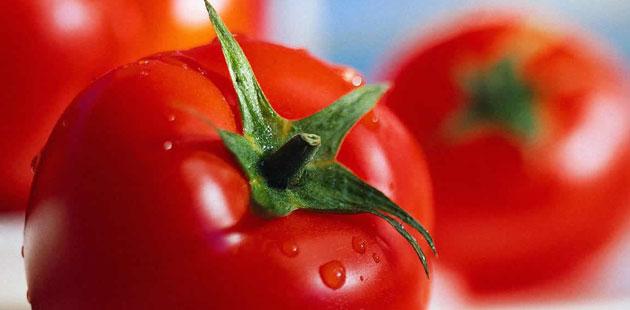 Rezultat slika za paradajz