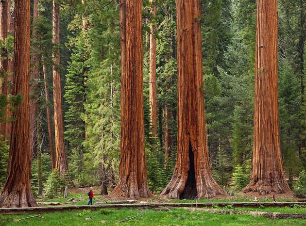 Sequoia-2